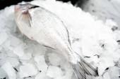 Zárási kilátás a friss hal a halom hideg zúzott jég