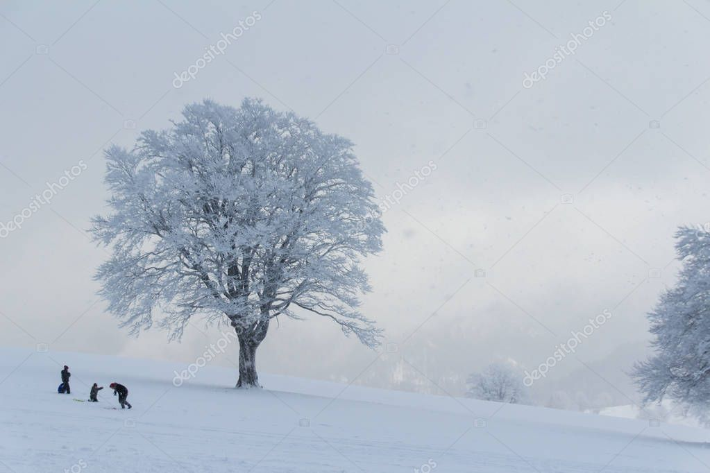 People enjoying snow paradise in the Black Forest