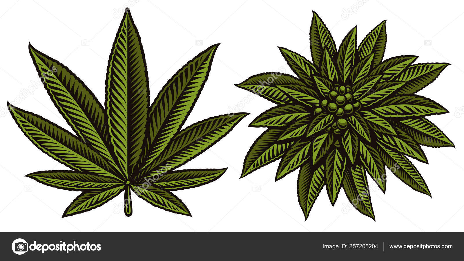 vector illustration of cannabis leafs on the white background stock vector c natali shtern 257205204 https depositphotos com 257205204 stock illustration vector illustration of cannabis leafs html