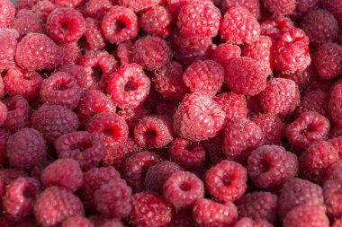 Background from fresh ripe red raspberry berries. Close-up, top view. Flat lay.