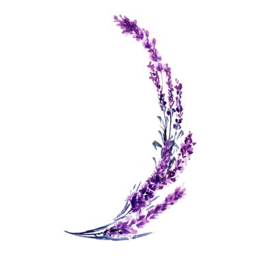Lavender branches  watercolor illustration. Delicate flowers twigs. Wedding invitations floral design. Love and marriage symbol. Valentines day design element. Lavender branches isolated raster