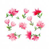 Magnolie handgezeichnete Illustrationen Set