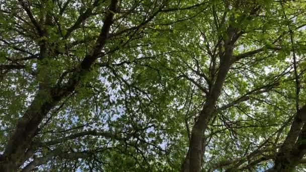 treetops to the sky view from below the rotatable camera slow motion video