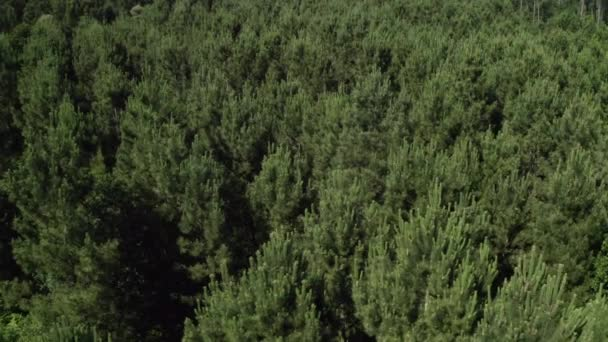 fly low over the treetops of a green forest, beautiful natural landscape shooting from a drone