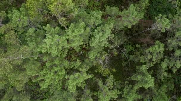 fly low over the treetops of a green forest, beautiful natural landscape shooting from a drone, rotation camera