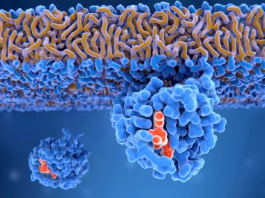 3d computer illustration of an activated Ras protein. Ras proteins are involved in transmitting signals within cells turning on genes involved in cell growth, differentiation and survival. Mutations in ras genes can lead to permanently activated prot