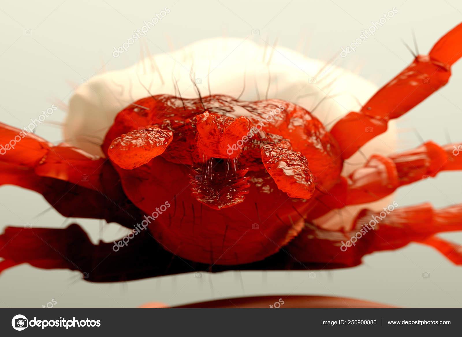 parazit dulce)