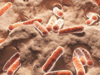 Bacteria, bacilli scientific Illustration