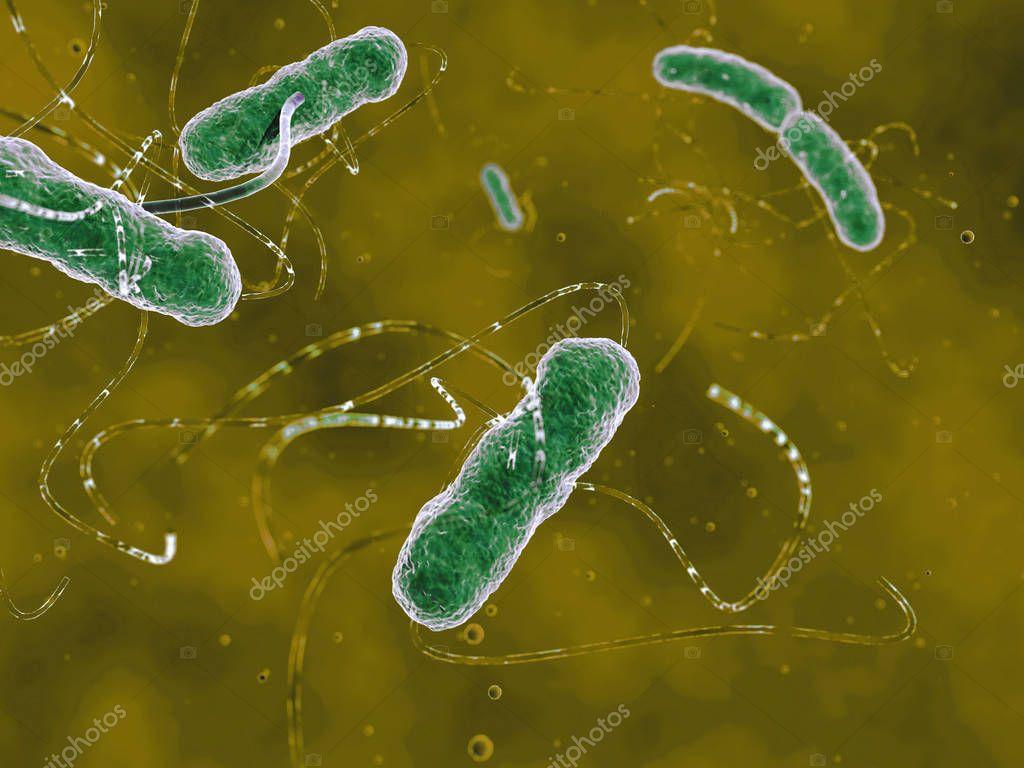 Digital visualization of EHEC bacteria. Illustration