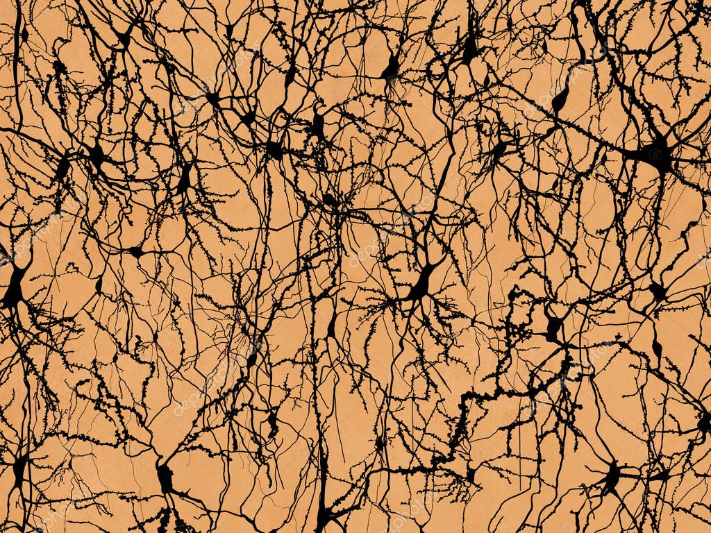 Neuron network, pyramidal neurons of the cortex in the style of Ramon y Cajals drawings. Illustration