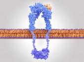 Inzulin aktivovaný ininulinovým vazením