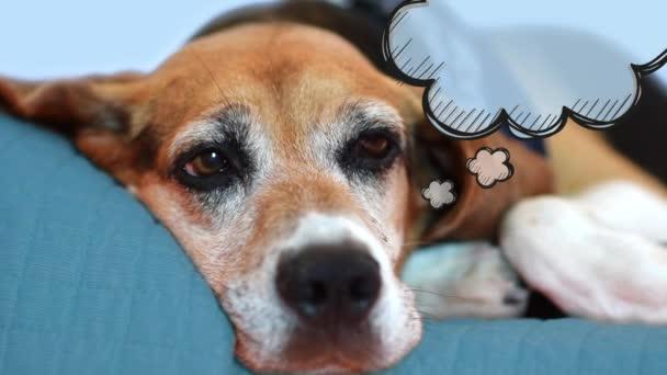 Hund träumt von Urlaub. gelangweiltes Haustierdenken: lustig
