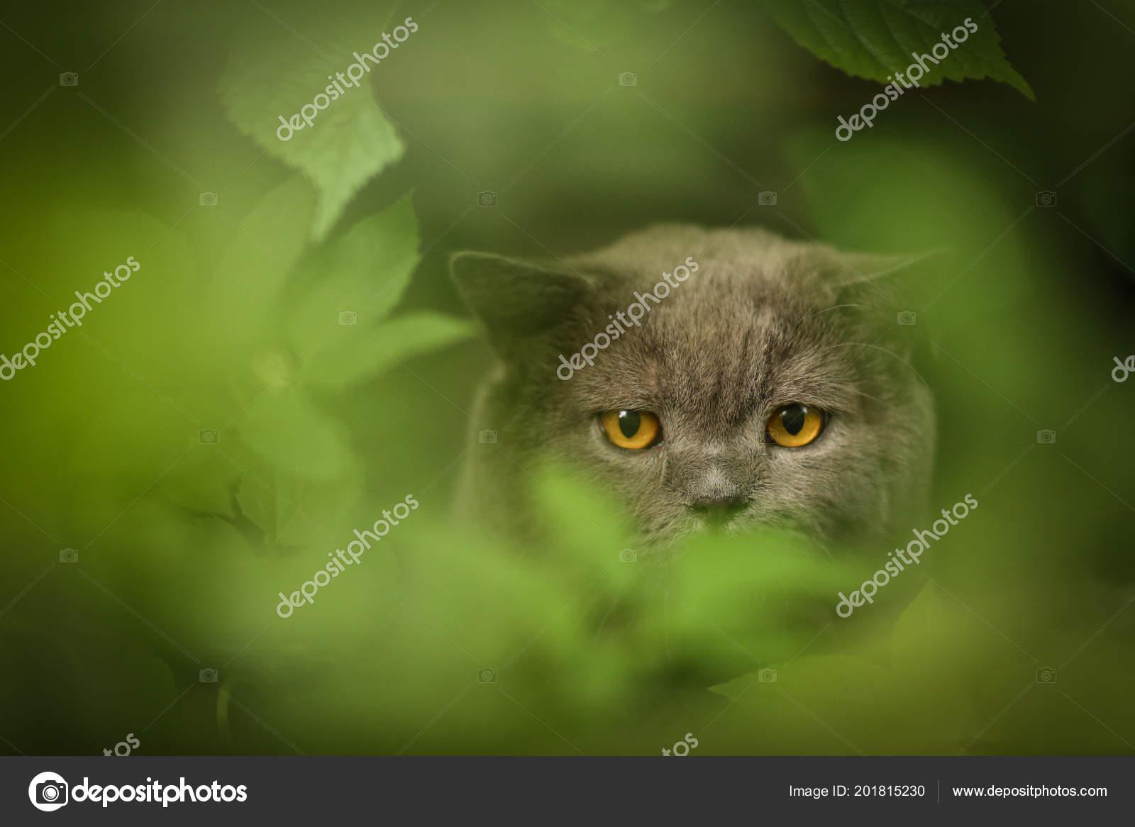 Stáhnout dospívající kočička