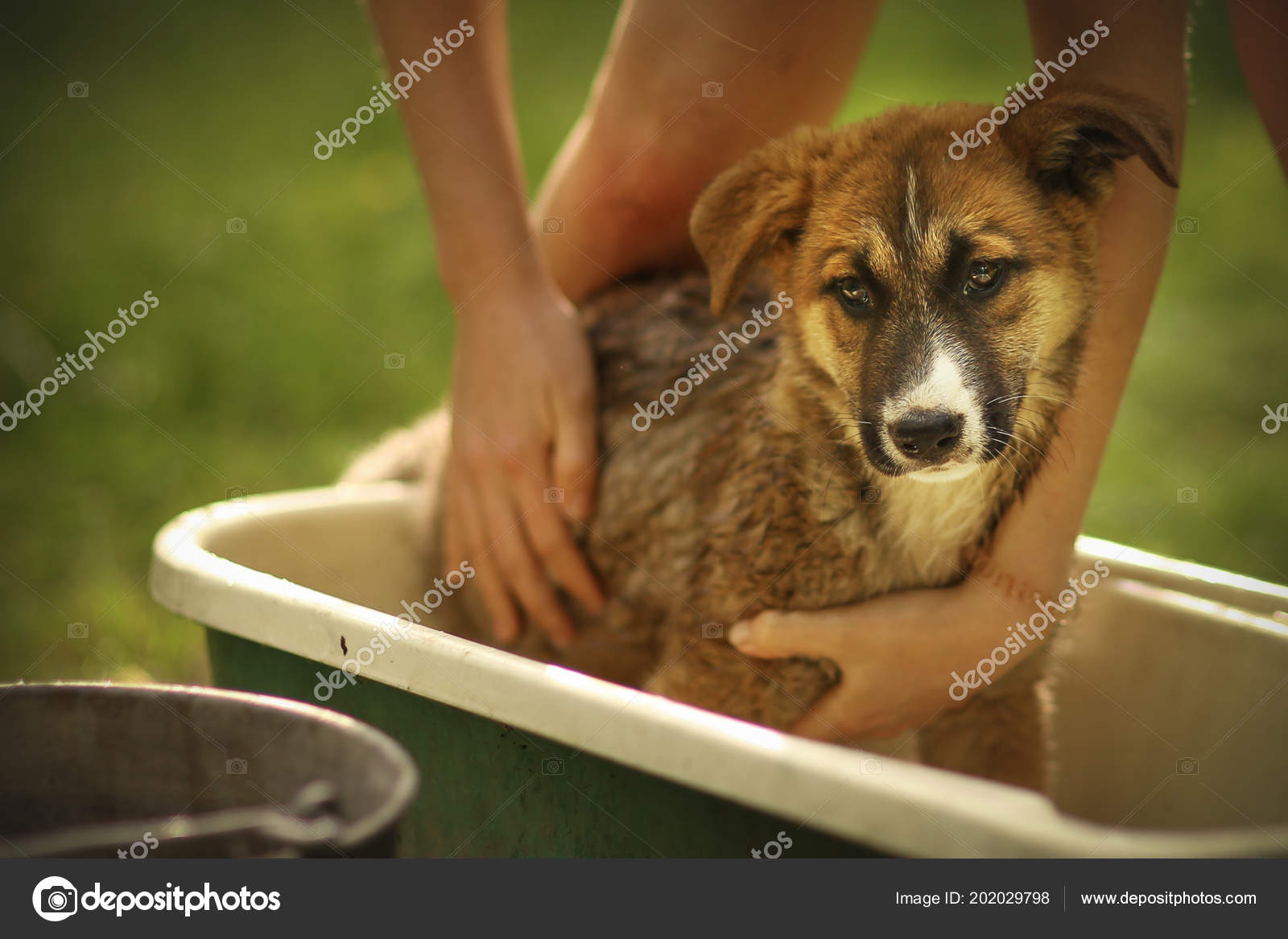 kids hand wasing puppy in bathtub close up photo — Stock Photo ...