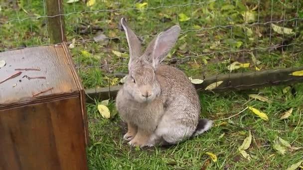 Roztomilý šedý králík sedí v zelené trávě. Velikonoční zajíček ve voliary stock záběry