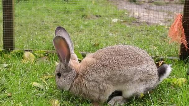 Das niedliche graue Kaninchen sitzt im grünen Gras. Osterhase in der Voliere