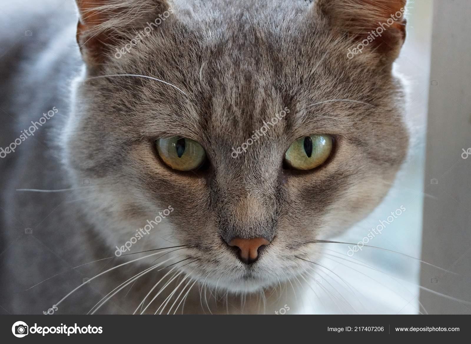 Velká kočička detailní obrázky