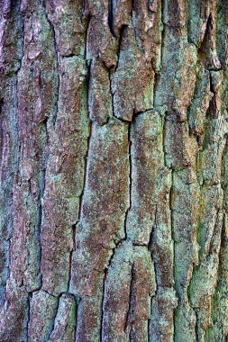 texture from the dry bark of an old large tree