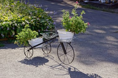 Decorative bicycle with flower pots stands on the asphalt