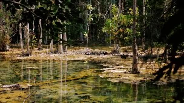 Tropické lesní jezero