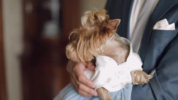 Dog terrier in funny dress sit on the mans hands