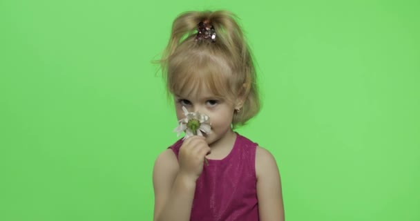 Girl holds chamomile flower and smile. Happy four years old girl. Chroma Key