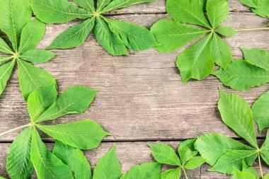 Horse-chestnut (Aesculus hippocastanum, Conker tree) flowers, leaf  background on wooden board