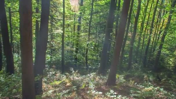 záběry krásného lesa na začátku podzimu