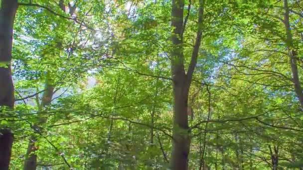 felvétel gyönyörű erdő kora ősszel