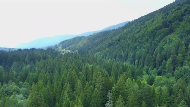 Zelené lesy se šíří do dálky. Všechno je opravdu nádherné..