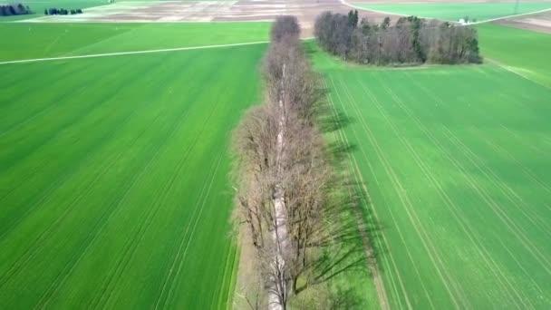 Gyönyörű zöld rétek és néhány fa között. Légi felvétel. Nyár van..