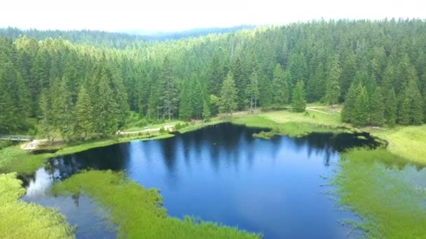 A clear dark blue water of the lake. Aerial shot. Everything is green, the forests and the meadows.