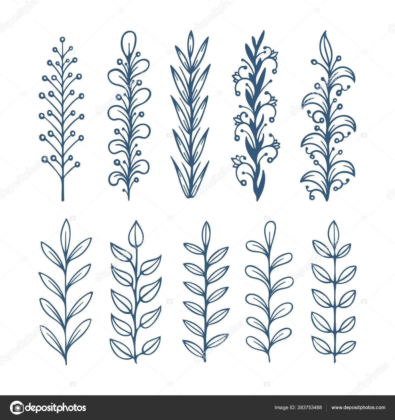 Gambar Ilustrasi Tanaman Bunga Koleksi Sketsa Bunga Tangan Digambar Bunga Sikat Gambar Sketch