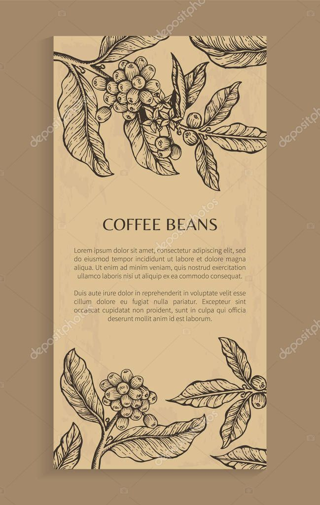 Coffee Beans Poster Brown Vector Illustration