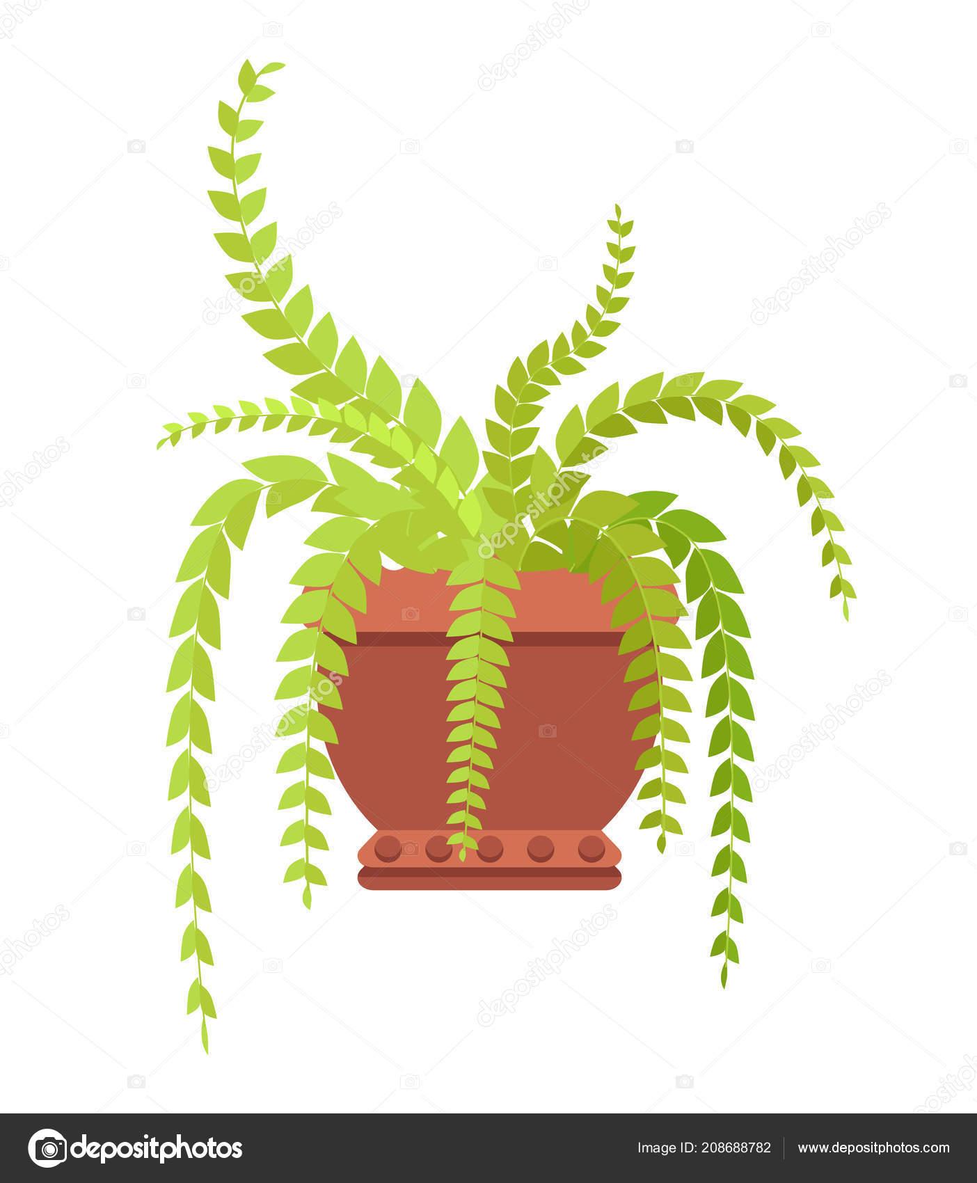 Fern Indoor Plant with Long Leaves in Big Clay Pot — Stock Vector on fern flowering shrubs, fern variety, fern fiddleheads with brown scales, fern id, fern scientific name, fern design, fern identification guide, fern foliage, fern container gardening, fern bonsai, fern foxtail lily, fern care, fern identification by leaf, fern baskets, fern propagation, fern growing conditions, fern assortment, fern girl, fern diagram, fern plants,