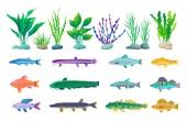 Fotografia Varie alghe e creature Marine illustrazione