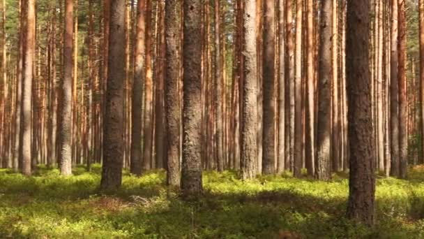 Velmi pěkná klidná a relaxační letní příroda východní Evropy. Krásná tráva, stromy, květiny a zvuky ptáků.