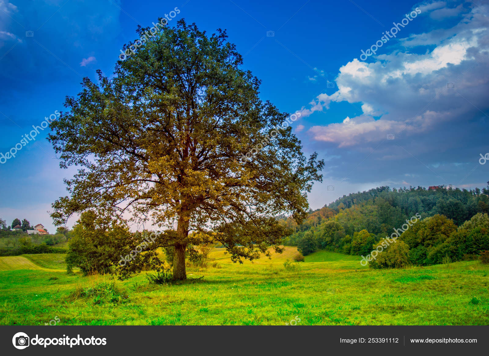 Beautiful Oak Tree Autumn Evening Day Light Clouds Mountain Forest Stock Photo Image By C Milosp86 253391112