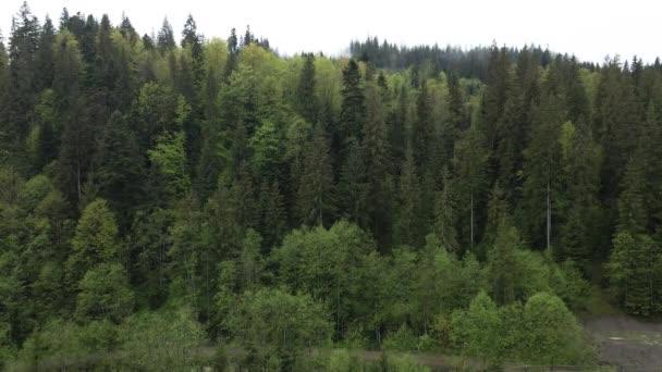 Smrkový les. Karpatské hory. Ukrajina. Letecký.