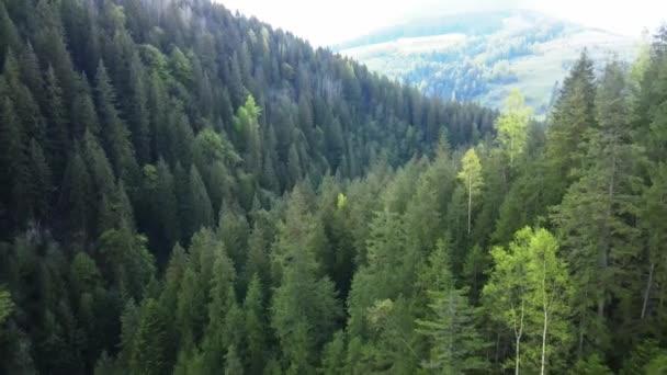Ukraine, Karpaten: Schöne Berglandschaft. Luftfahrt