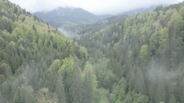 Ukraine, Karpaten: Schöne Berglandschaft. Antenne, flach, grau