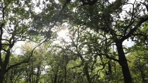 Letecký pohled na zelený les v létě. Ukrajina. Zpomalený pohyb