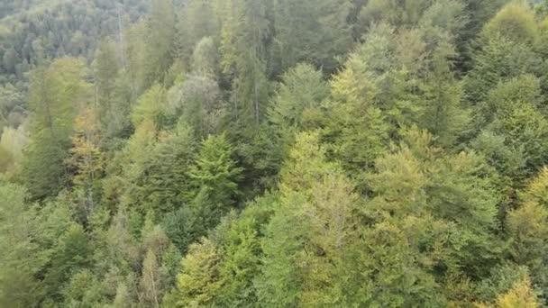 Wald in den Bergen. Luftaufnahme der Karpaten im Herbst. Ukraine