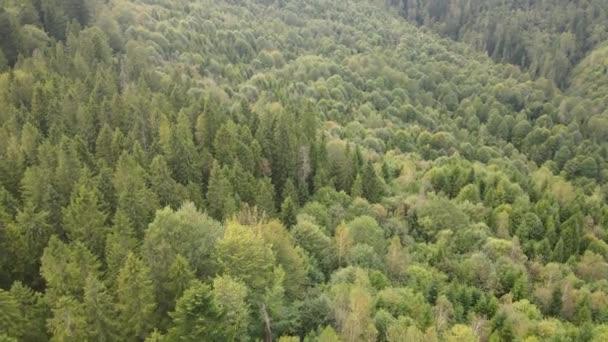Les v horách. Letecký pohled na Karpatské hory na podzim. Ukrajina