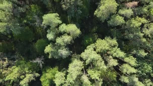 Letecký pohled na stromy v lese. Ukrajina