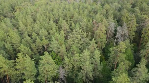 Stromy v lesním leteckém výhledu. Zpomalený pohyb