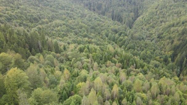 Stromy v horách zpomalují. Letecký pohled na Karpatské hory na podzim. Ukrajina