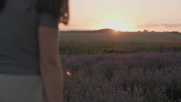 Hand of young woman tenderly holds lavender flowers summer sunset slow motion slide back. View of field of large blooming of lavender flowers. Suns rays are purple plant. Relax. Aromatherapy