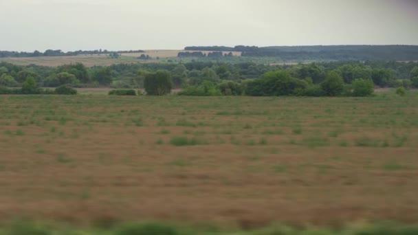 Doprava, cestování, silnice, železnice, krajina, pojetí smilstva - pohled z okna rychlovlaku na krajinu žlutého pšeničného pole, elektrických tyčí a lesů za tupého oblačného počasí letní večer