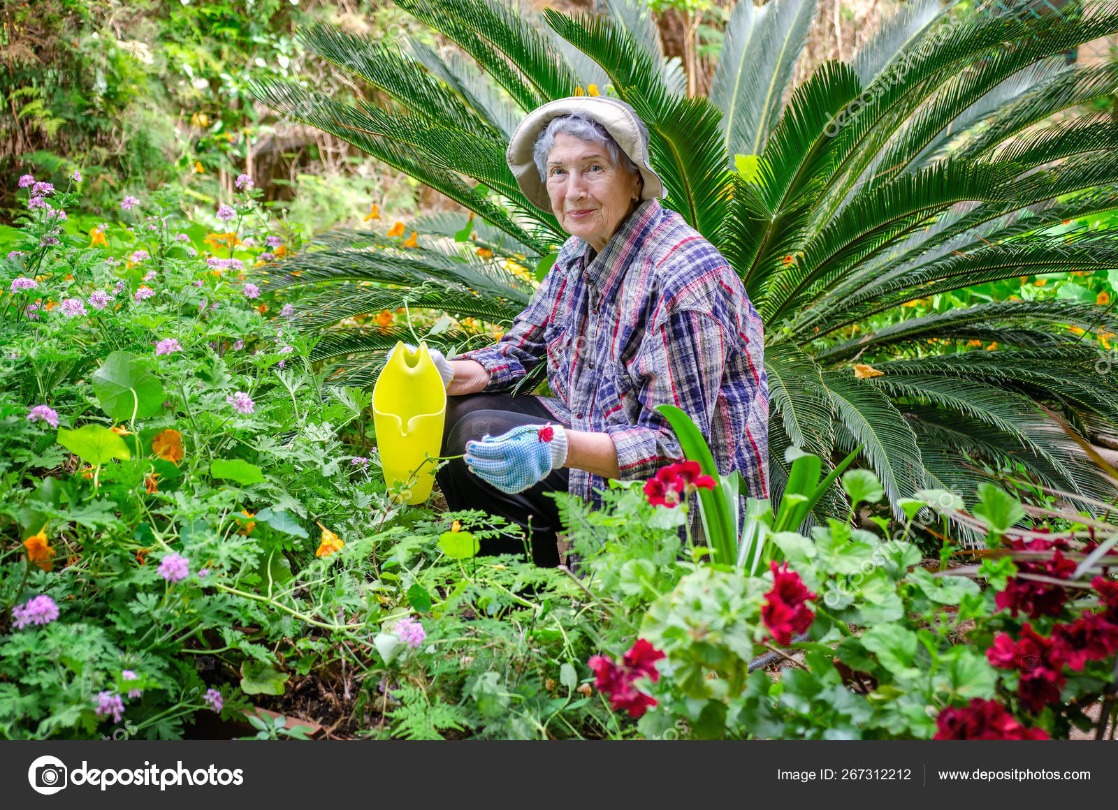 Senior adult woman in the male big sized plaid shirt sits in the center of a flower bed.